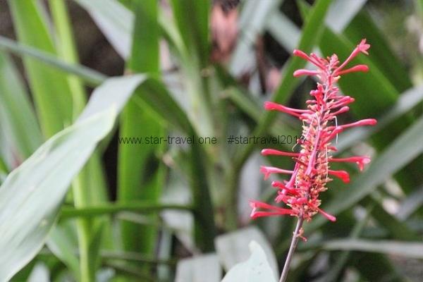 Asuncion, Botanischer Garten
