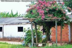 Paraguay Land (2)